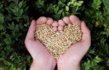 Neu: Bio-Getreide zum Selbstanbauen
